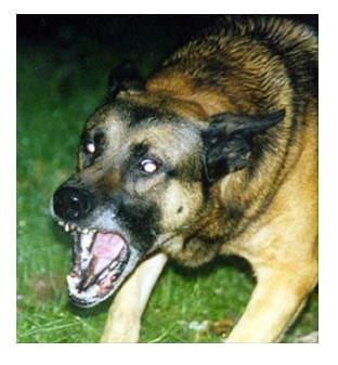 !aggressivedog